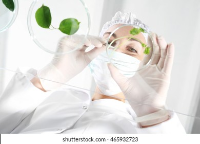 Genetic laboratory. Biotechnologist analytical laboratory tested samples of plants