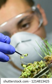 Genetic modified organisms, conducting laboratory tests
