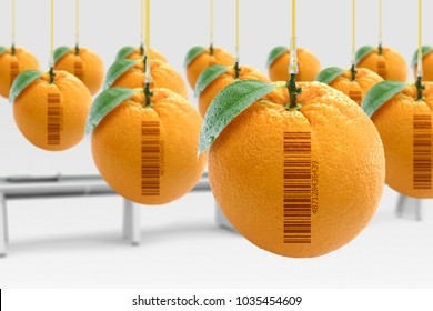 Genetically modified food concept (GMO). Oranges artificially produced in laboratory with hormones. With barcode (fake barcode).