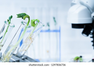 Genetically modified plant tested  .Ecology laboratory exploring new methods of plant breeding.