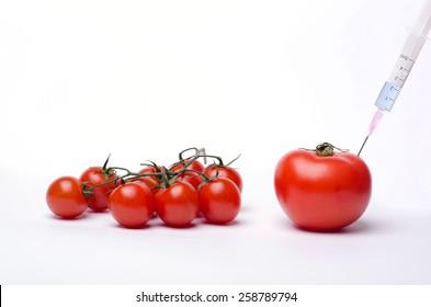 Genetically modified tomato - GMO