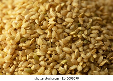 Genmai, or brown rice. The whole grain of rice of Japanese rice, which the germ or outer bran layers have not been removed. Also called unpolished rice.