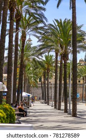 Genoa (Genova), Italy - 07/27/2017 - Walking alley with tall palm trees in the Old Harbor