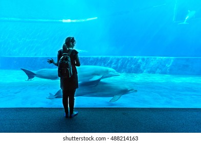 GENOVA, ITALY - 11 SEPTEMBER 2016 - A visit in the famous The Aquarium of Genoa (in Italian Acquario di Genova), the largest aquarium in Italy and among the largest in Europe. Here the dolphins