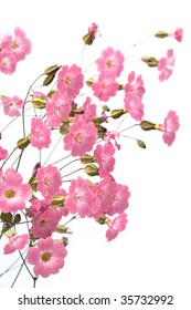 gentile pink flowers on the white background