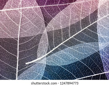 gentle beautiful natural background of colorful transparent skeletons of leaves in bright light