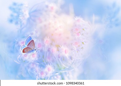 A gentle blue butterfly on a fluffy pink flower in nature in soft pastel colors with a soft focus, macro. Dreamy, romantic, elegant, art image of  living nature.