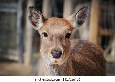 a gentle deer's expression