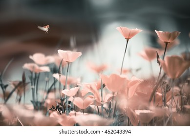 Gentle floral background with pink poppies in sunlight and soaring ladybug tinted in soft pastel colors.