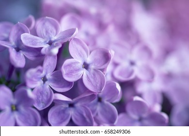 Gentle flower background from flowers of a lilac.