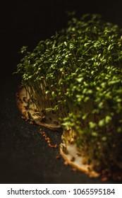 The gentle leaves macro photo on dark background