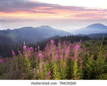 A gentle misty morning in the wild Carpathians Ukraine at sunrise against the beautiful backdrop. Clean nature and fresh greenery gives joy and health to the traveler in Eastern Europe