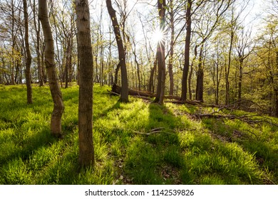 Gentle rays of the sun touch the spring the forest floor is liable