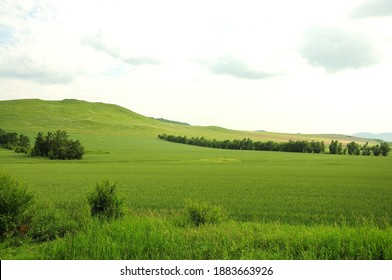 A gentle slope of a high hill overgrown with grass and rare bushes. Khakassia, South Siberia, Russia. - Shutterstock ID 1883663926