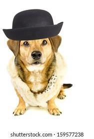 gentlemen rapper dog