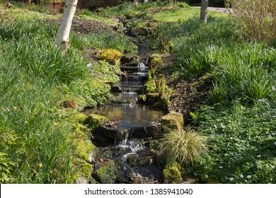 Gently Flowing Stream in a Bog Garden at Rosemoor in Rural Devon, England, UK