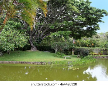 A gently flowing stream passes by tropical trees and an inviting bench.