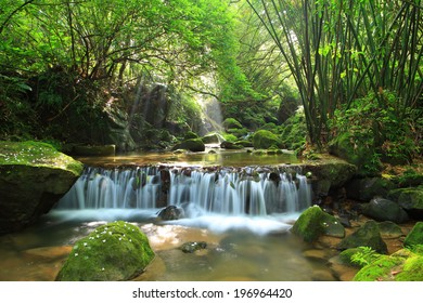 A gently-flowing forest stream drops down a small waterfall.