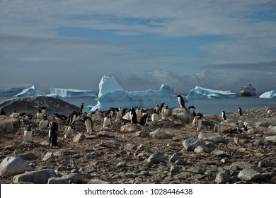 gentoo penguin colony at cuverville island, antarctic peninsula, antarctica