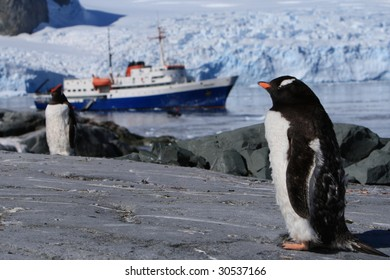 Gentoo Penguin and the cruise
