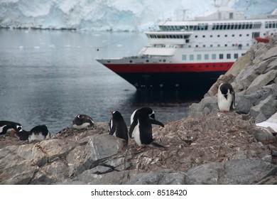 Gentoo penguin rookery with cruise ship anchored in the bay,[Pygoscelis papua]Neko Harbor, Andvord Bay,Antarctica