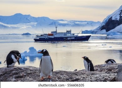 Gentoo penguins standing on the rocks and cruise ship in the background at Neco bay, Antarctica