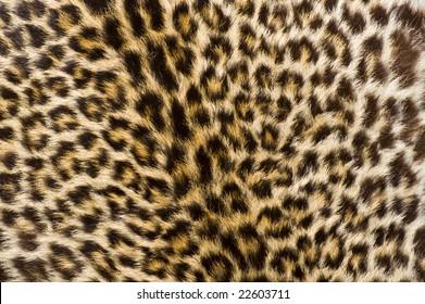 A Genuine Cheetah Skin [Fur]