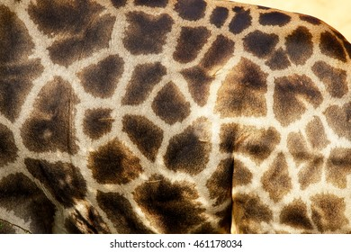 Genuine leather skin of giraffe with light and dark brown spots,Leather giraffe,leather,giraffe,textured skin of giraffe, textured skin.