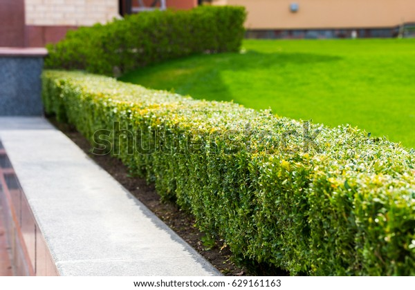 Geometric Bush Landscape Design Stock Photo Edit Now 629161163