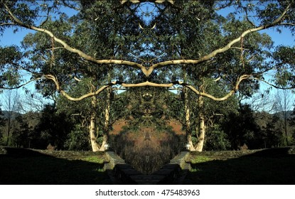 geometric composition of the tree of good and evil,  idyllic plant allegory, mandala, abstract surreal photography, abstract naturalism collection Munimara