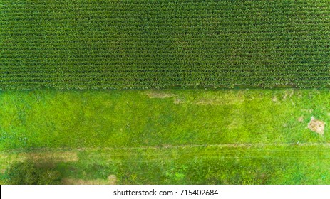Geometric corn crop fields viewed from above