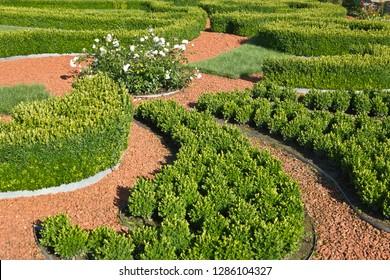 Geometric garden  in Rundale, Latvia