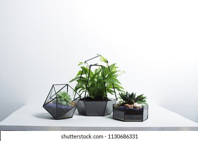 geometric glass terrariums with a succulent and spatifilum flowers. composition on a table