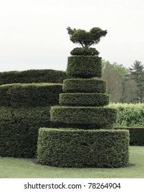 geometric shape bush