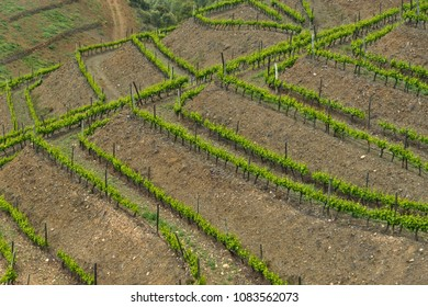 geometrical wineyard field