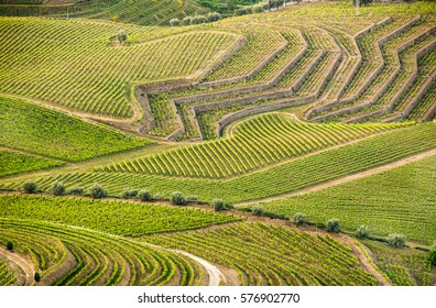 Geometry in landscape - vineyards in Douro Valley, Portugal, home of port wine.