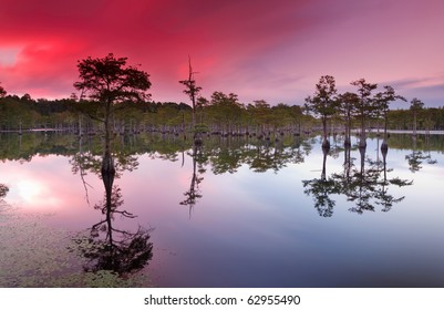 George L smith state park, south Georgia.  Sunset over the cypress trees and the swamp