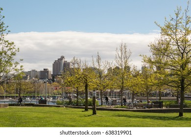 George Wainborn Park trees in sunny day, Vancouver, BC