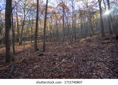 George Washington National Forest Autumn Forest Landscape with Fall Foiliage and Fallen Leaves