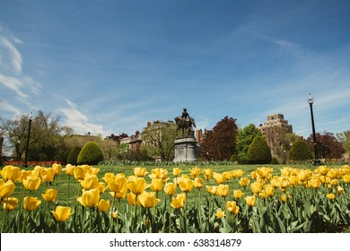 George Washington statue and yellow tulips in Boston Public Garden. Tulips blooming in the springtime in Boston