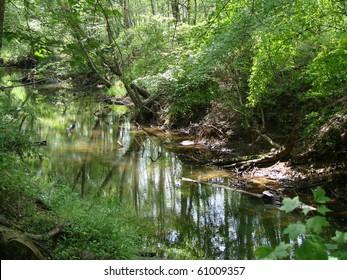Georgia creek in Summer