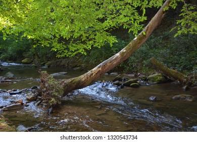 Georgia State Park