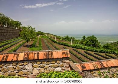 Georgia. Vineyard green hills landscape view, Alazani valley
