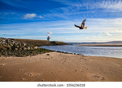 Georgian Lighthouse at Burry Port Carmarthenshire Wales near the Gower Peninsula at the Loughor Estuary with a red kite bird flying in the sky