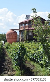 Georgian vineyard with giant qvevri