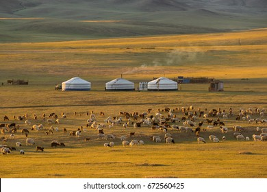 """GER"" Mongolia accommodation and goat herd."