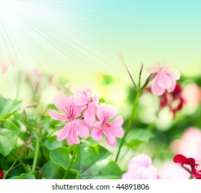 geranium flowers and plants useful as a background