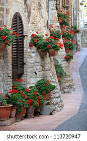 Geranium flowers in streets of Assisi, Umbria, Italy, Europe