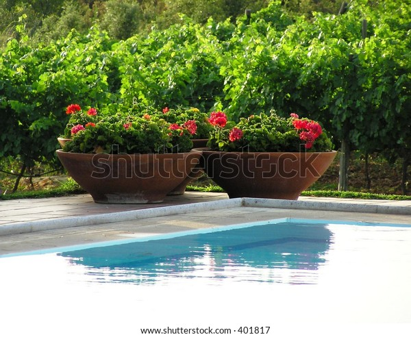 geranium pots by the pool, greek house, closer view
