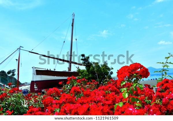 geraniums on the sea in sestri levante (genoa) italy